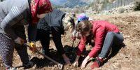 Antalya'da tıbbi aromatik bitkilerin yaygınlaştırılması ve bilinçli tarımla üretilmesi için çalışma yapılıyor