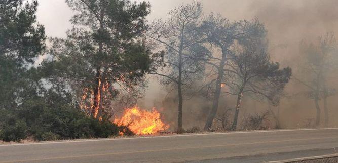 Yangınlarının bilançosu… 12 bin dönüm arazi yandı