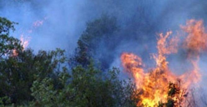 İçi su dolu şişe, en önemli orman yangını sebebi