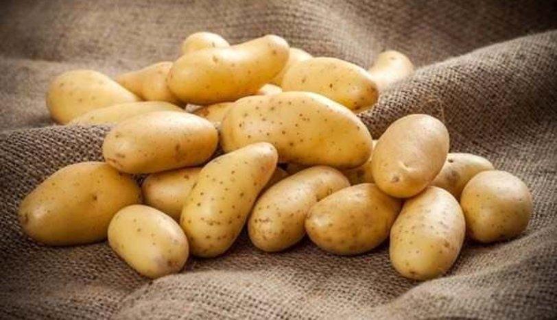 Patates üreticisi iflasın eşiğinde