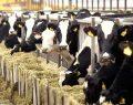 """""""Çiftlik Bank"""" incelemesi KKTC'ye uzandı… """"Halamın  Güzel Çiftliği"""" kimin?"""