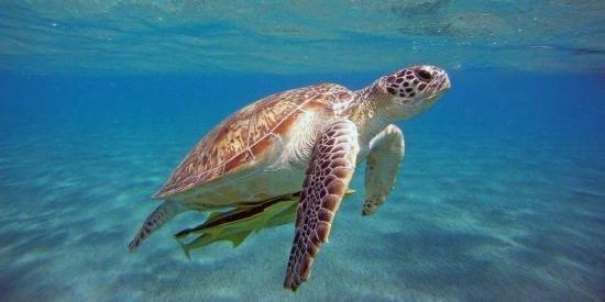 Sokan avcıları kaplumbağaları öldürüyor